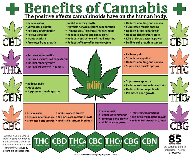cannabis doctors in florida